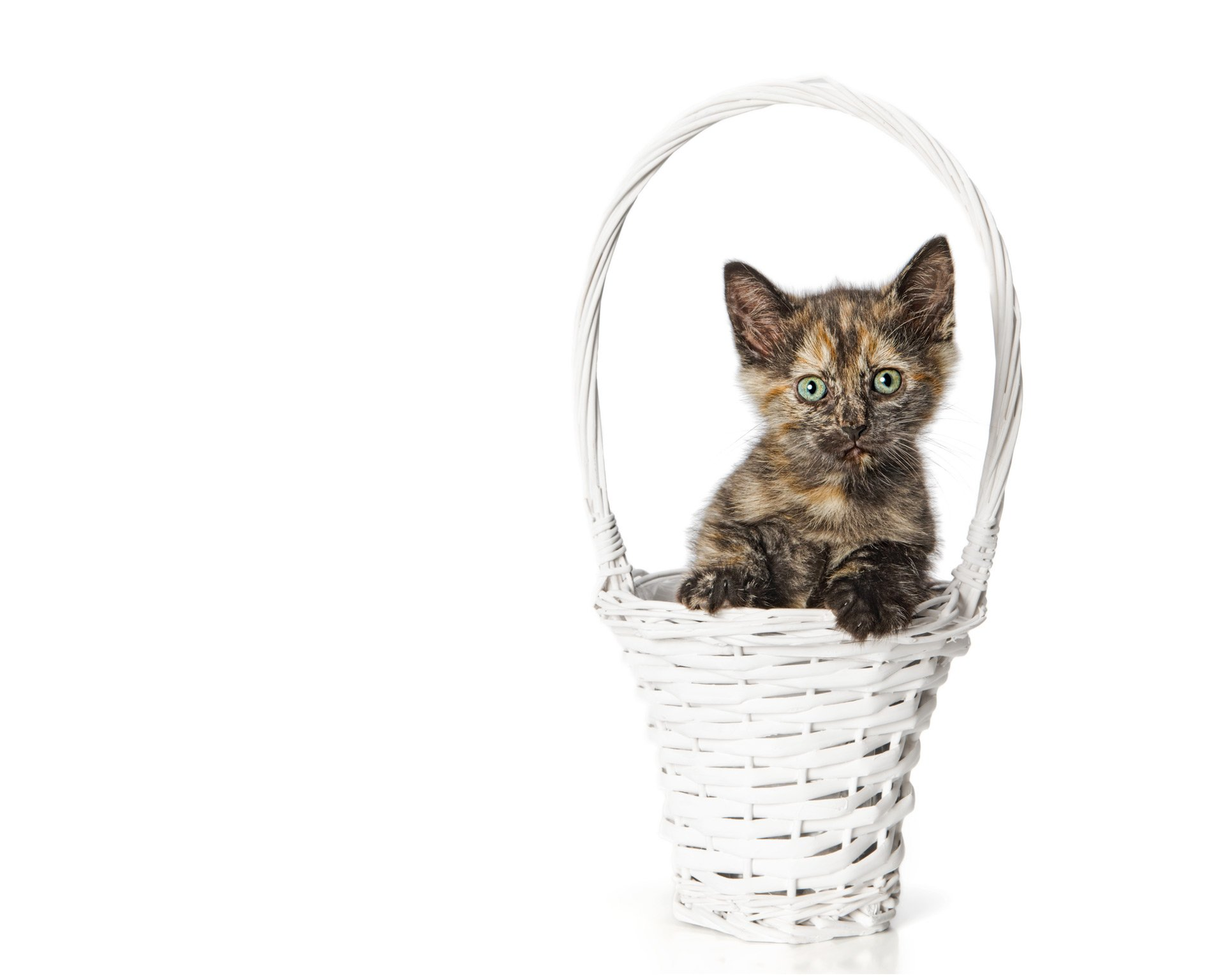 kitten-in-basket