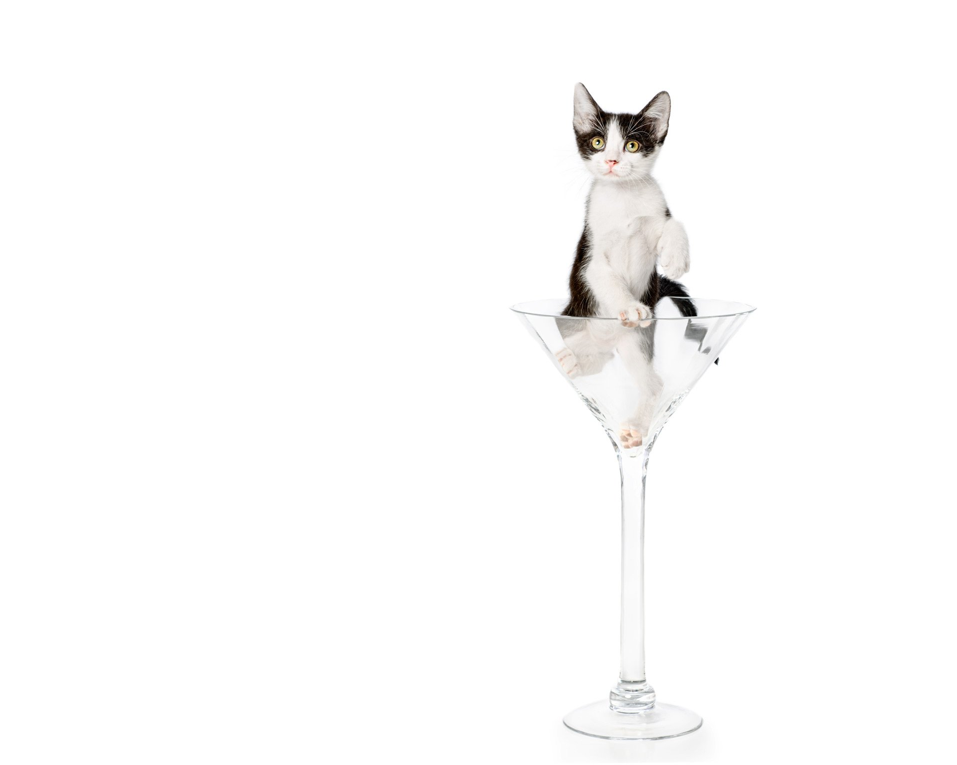 cat-black-and-white-kitten-in-martini-glass