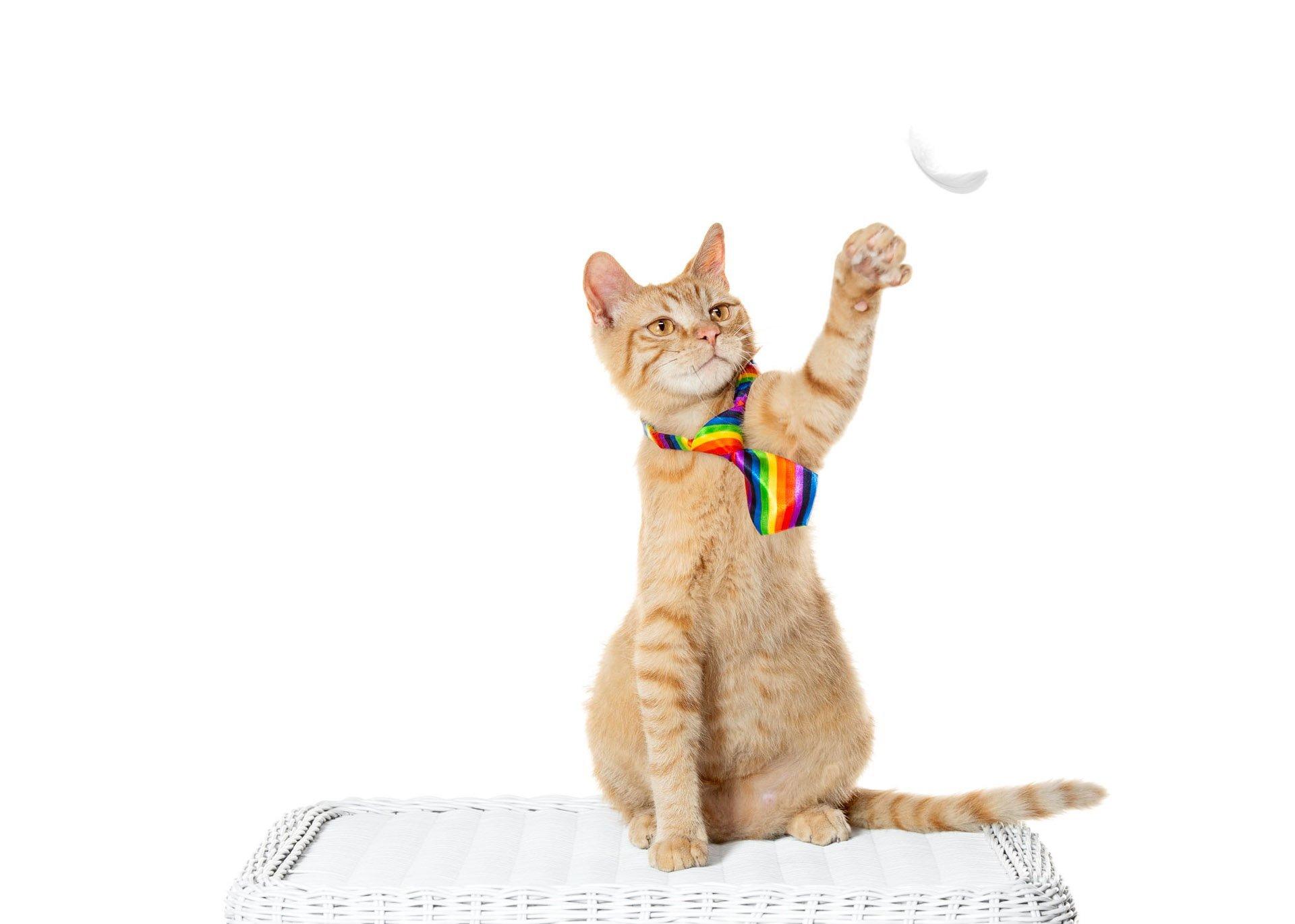 cat-lgbt-pride